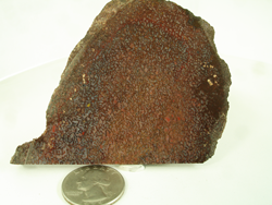 Picture of dinosaur bone rough material.